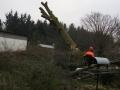 Topkapning/fældning af bøgetræ, Bratbjerg